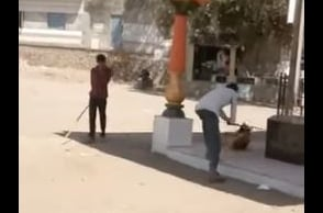 Shocking video footage: Dog beaten to death